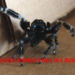 Hug an Arachnid – tRN180